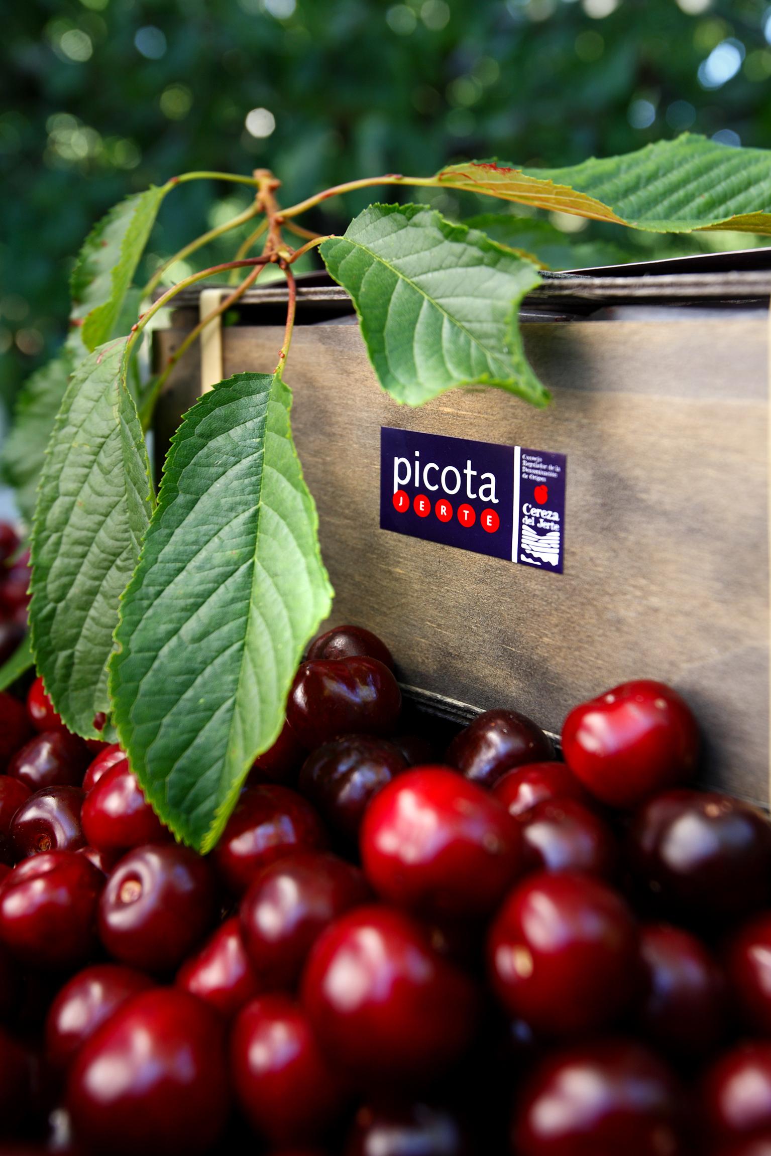 Hola Picota – die Kleine oder keine
