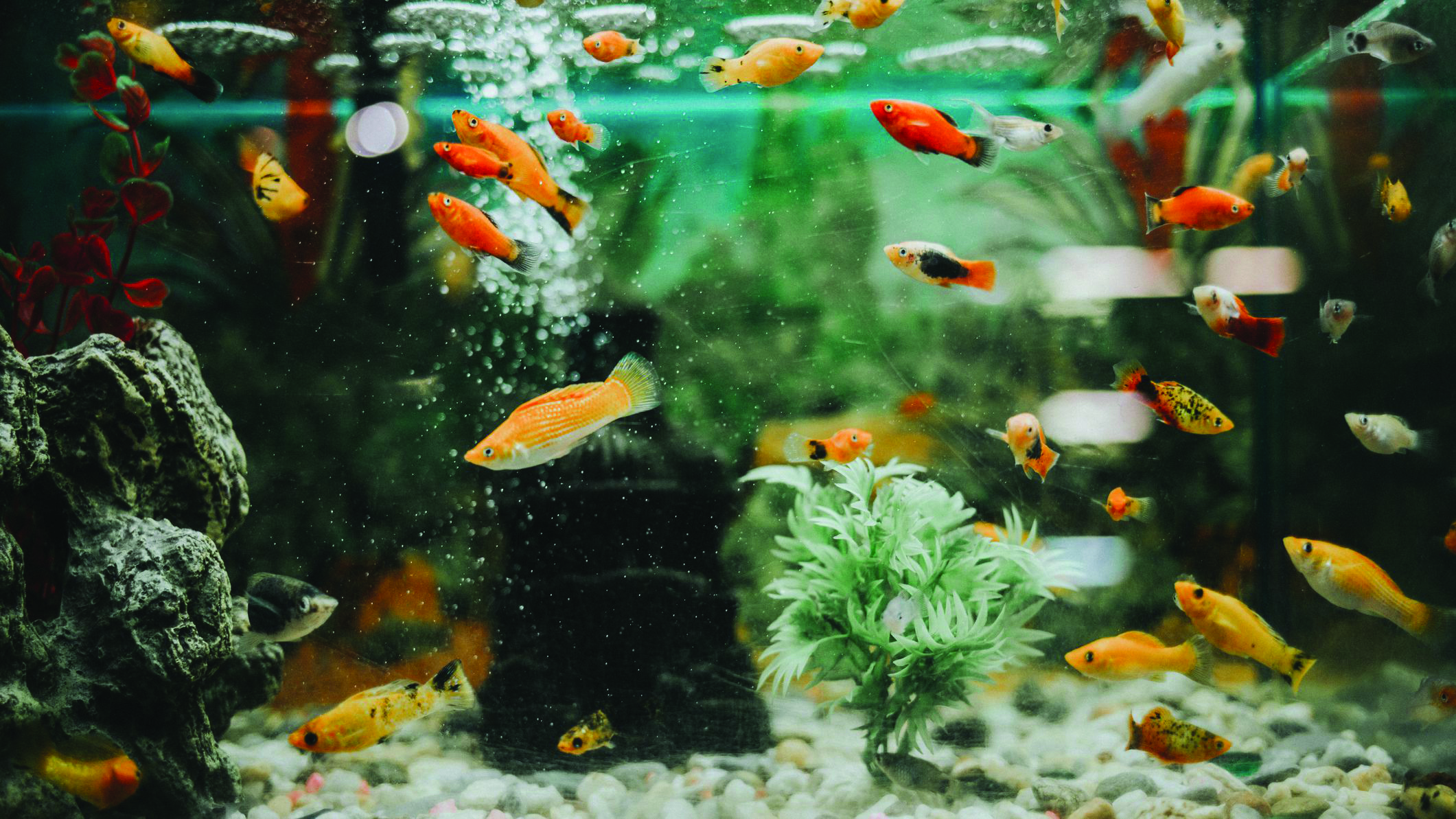 The Expert guide for stocking an aquarium