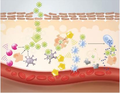 Neuer Ansatz für ein stärkeres Immunsystem