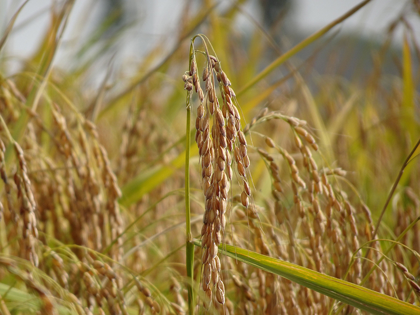 BENEO expands portfolio with new organic ingredients
